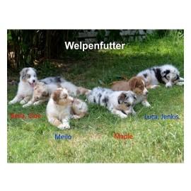Besonderes Hühnchenfleisch, Vollwertreis, Menhaden-Hering, Obst, Topinambur & Kräuter (WF) - PUR Hundefutter