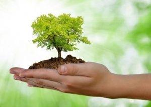 Natur in unserer Hand